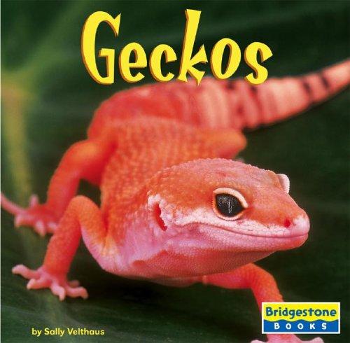 Geckos (World of Reptiles)