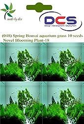DCS (048) Spring Bonsai aquarium grass 10 Seeds Novel Blooming Plant-18