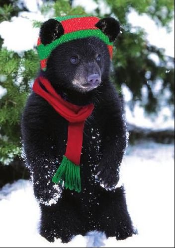National Geographic 'Baby Bear'S Holiday' Christmas Card front-392111