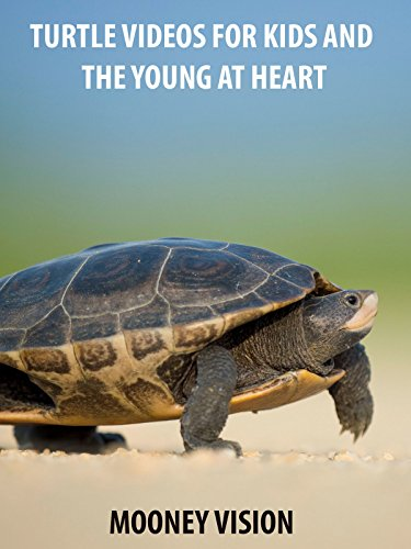 Turtle Videos For Kids And The Young And Heart on Amazon Prime Instant Video UK