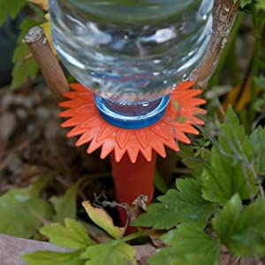 Caraselle Pack of 6 Watering Spikes - the best plant watering solution