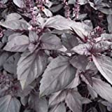 Herb Seeds - Basil Red dark Opal - 250 Seeds