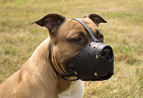 Please Pet My Dog S Snout