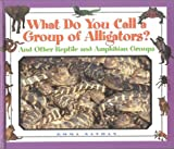 img - for What Do You Call a Group Of - Alligators? And Other Reptile and Amphibian Groups book / textbook / text book