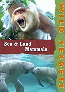 Wild Secrets: Sea and Land Mammals (Non-Profit)