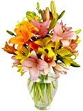 12 Stem Assorted Asiatic Lily Bunch - With Vase