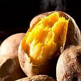 種子島産安納芋1kg おやつにぴったりのプチサイズ 蜜芋