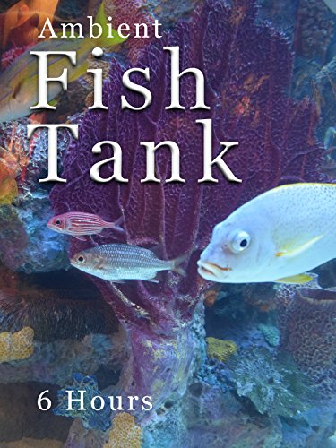 Ambient Fish Tank