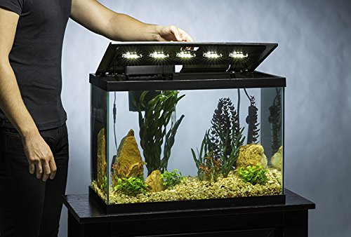 20 gallon aquarium kit led scratch resistant glass fish for Fish tank 20 gallon