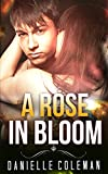 ROMANCE: A Rose in Bloom (Paranormal Werewolf shifter Menage Romance Collection) (Mix: Romance Collection Book 1)