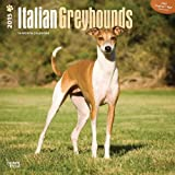 Greyhounds, Italian 2015 Square 12x12 (Multilingual Edition)