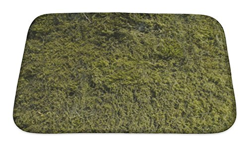 "Gear New Image Of Moss On The Tree Bath Mat, Microfiber, Foam With Non Skid Backing, 24""x17"", GN11847"