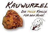 Kauwurzel für