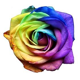 虹色のバラ・レインボーローズの花束 本数指定(3本): ホーム&キッチン