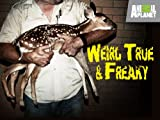 Weird True and Freaky Season 2