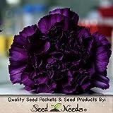 "100 Seeds, Carnation ""King of Blacks"" (Dianthus caryophyllus) Seeds By Seed Needs"