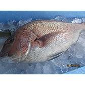 鯛(めでたい1,2kg前後)