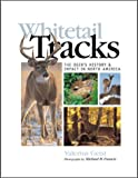 Whitetail Tracks: The Deers History & Impact in North America