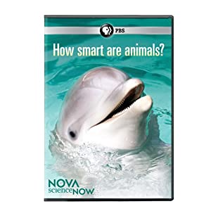Nova Science Now: How Smart Are Animals