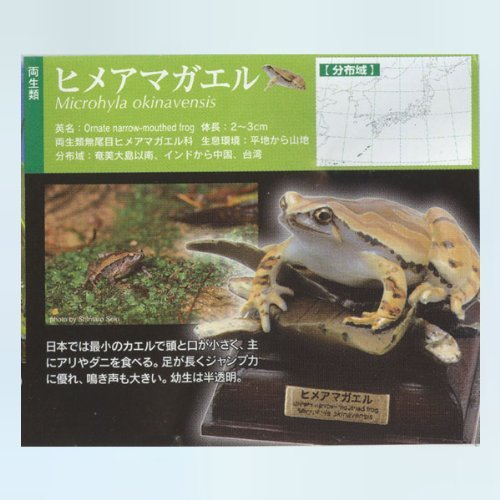 kitan-club-kitan-club-nature-technicolor-japanese-frog-hime-tree-frog-gachapon-figure-by-kitan-club