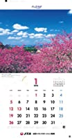 2014年 JTA カレンダー 「美ら島物語」 (壁掛けタイプ)