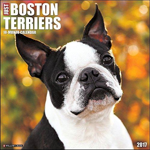 Boston Terriers 2017 Wall Calendar