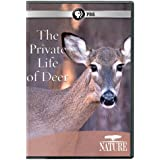 Nature: Private Life of Deer