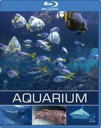 Exotisches salzwasser aquarium naturfilm dokumentation for Salzwasser aquarium