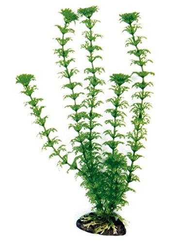 wave-cabomba-plante-classique-pour-aquariophilie-taille-xl