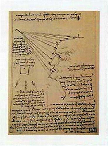 Posters: Leonardo Da Vinci Poster Art Print - Studio Di Volto Umano (20 X 14 Inches) front-712302