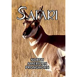 Safari North American Pronghorn
