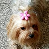 Alfie Pet By Petoga Couture - Julia Hair Clip For Dogs, Cats And Small Animals - Color: Hot Pink Flower