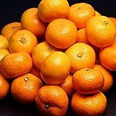お中元ギフト フルーツ 果物 時期限定!極上の甘さ ハウスみかん オーガニックサイバーストア(cg)