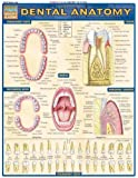 Dental Anatomy (Quickstudy: Academic)