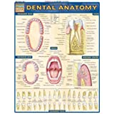 Dental Anatomy: Reference Guide (Quickstudy: Academic)by Inc. BarCharts