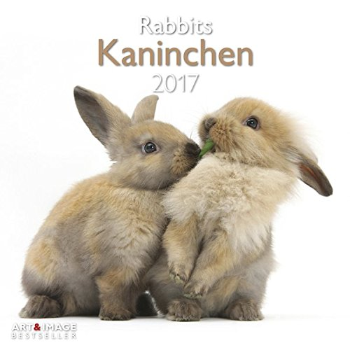 kaninchen-2017-tierkalender-2017-kaninchen-kalender-hasen-kalender-haustier-kalender-30-x-30-cm