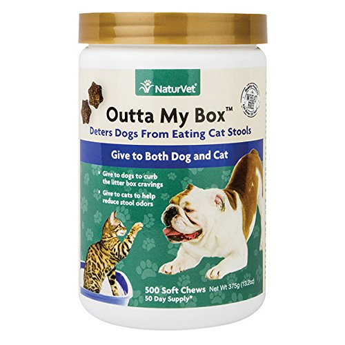 How To Keep My Dog From Eating Cat Litter