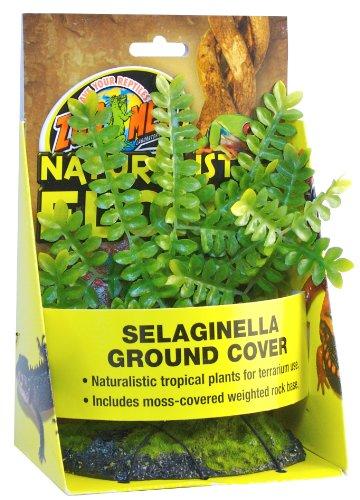 Zoo-Med-Selaginella-Plante-en-Plastique-pour-Terrarium
