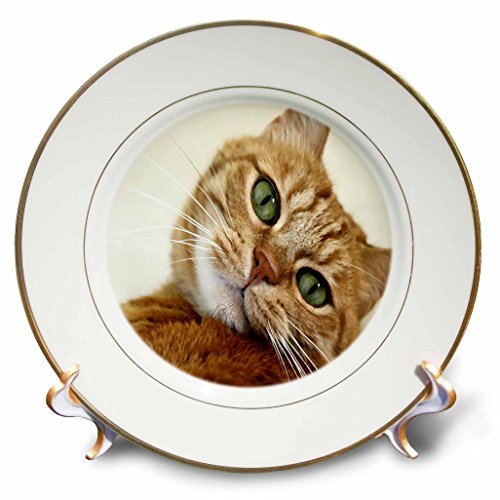 Florene - Cat Art - Print of orange Tabby Cat Painting - 8 inch Porcelain Plate (cp_203883_1)