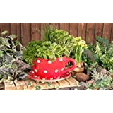 Giant Red Polka Dot Tea Cup Planter