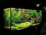 Mixed Aquarium Plant Seeds + Aquarium Soil + Fish Food - Combo Pack, Sold by Vasuworld