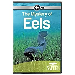 Nature: Mystery of Eels