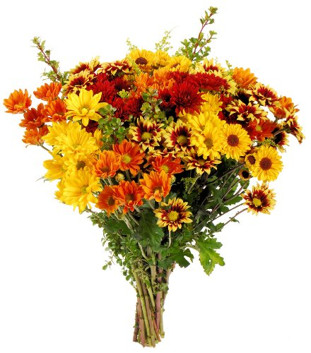 Fresh Cut Fall Flower Bouquet - Bright Autumn Colors - Direct from Grower - Free Fast Shipping