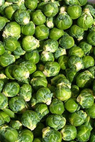 Brussel Sprouts- 50 Seeds