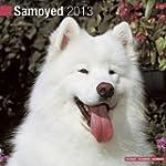 Samoyed 2013 Wall Calendar