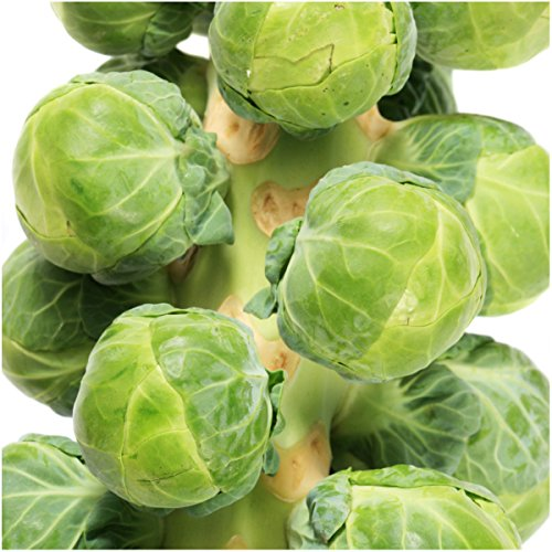 Package of 500 Seeds, Brussels Sprout Long Island Improved (Brassica oleracea) Non-GMO Seeds by Seed Needs