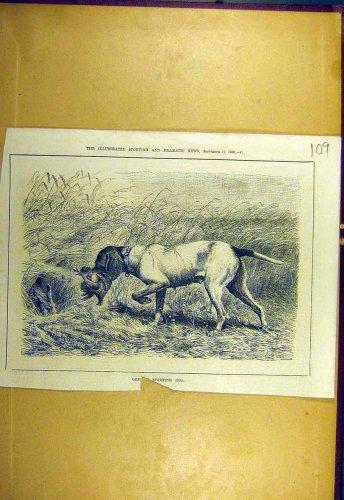 1880 German Sporting Dog Shooting Sport Old Print