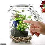 (熱帯魚 水草)私の小さなアクアリウム ~ベタと水草の共演~ 水草と生体キット 1セット 説明書付き 本州・四国限定[生体]