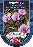【Autumn Bulb】Oxalis melanostricta Ione Hecker オキザリス・イオン・ヘッカー・球根 (3球×10袋・30%OFF)