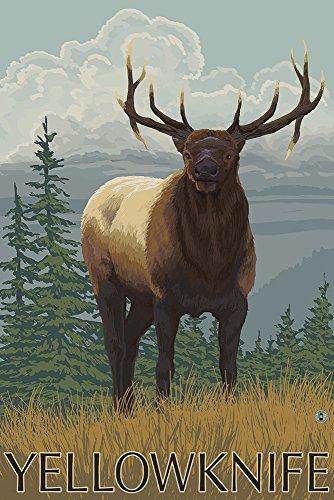 Yellowknife, Canada - Elk Scene (24X36 Giclee Print)